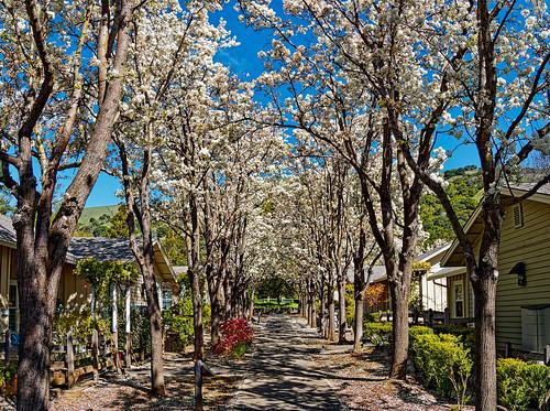olympus trees flowers nature village landscape hills