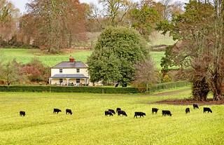 Tranquil Farmhouse
