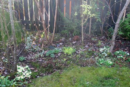 my Garden.primroses