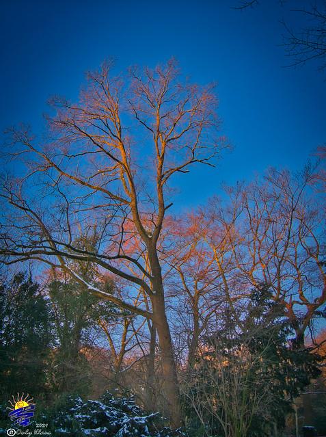 Benrather Schlosspark Feb-21 941