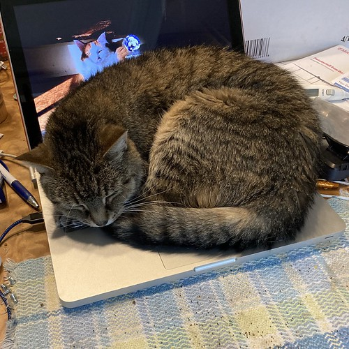 Mavis naps on her heated clicky platform