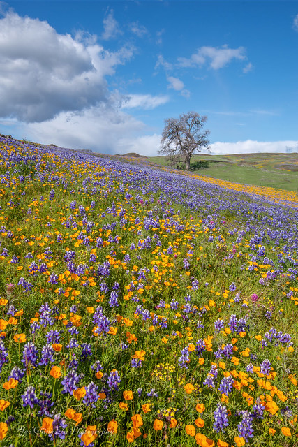North Table Mountain wildflowers 2021