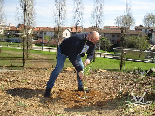 2021_03_22 - Quinta das Freiras - Plantação de 120 árvores (152)