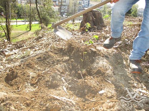 2021_03_22 - Quinta das Freiras - Plantação de 120 árvores (130)