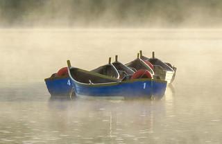 Bundle of Boats