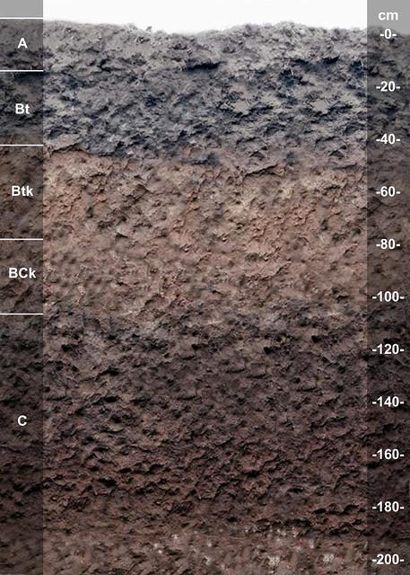 Abbie soil series OK