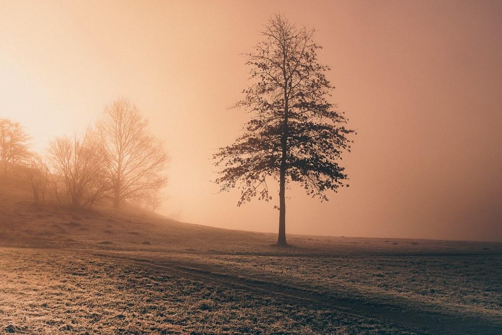 The orange meadow