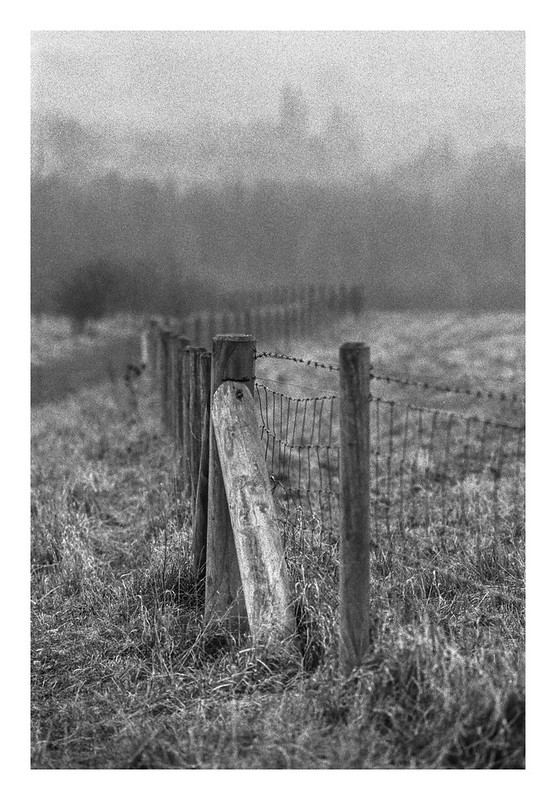 Follow the fence down into the mist
