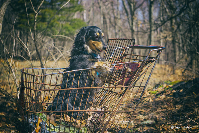 Where the heck is the pet food aisle?  (explored)