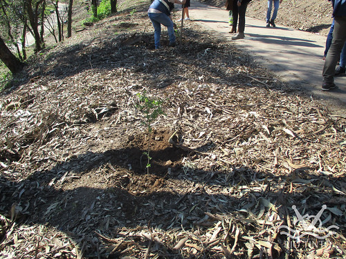 2021_03_22 - Quinta das Freiras - Plantação de 120 árvores (60)