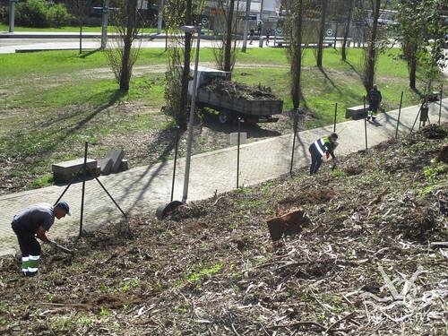 2021_03_22 - Quinta das Freiras - Plantação de 120 árvores (140)