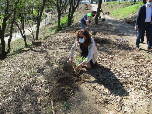 2021_03_22 - Quinta das Freiras - Plantação de 120 árvores (48)