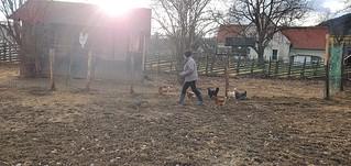 Oma mit den Hühnern 🐔🐔...und im Hasenstall geht es rund🐇🐰