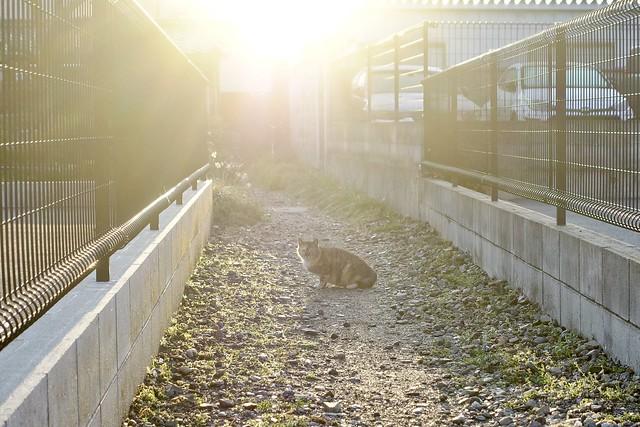 Today's Cat@2021−03−23