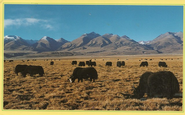 China - The Treasure of Highland