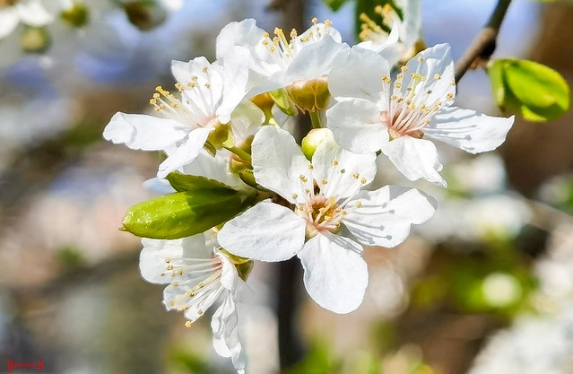 9542 - Spring Flowers
