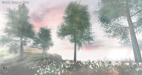 The Little Branch - Black Walnut Tree - Shiny Shabby
