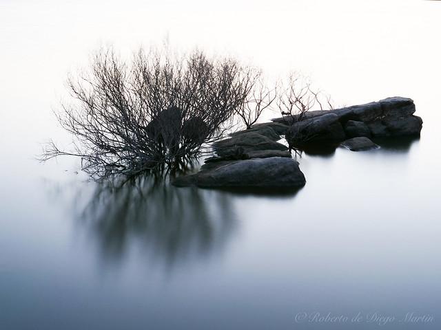 La vida es una isla, las rocas son sus deseos,los árboles sus sueños y las flores su soledad.