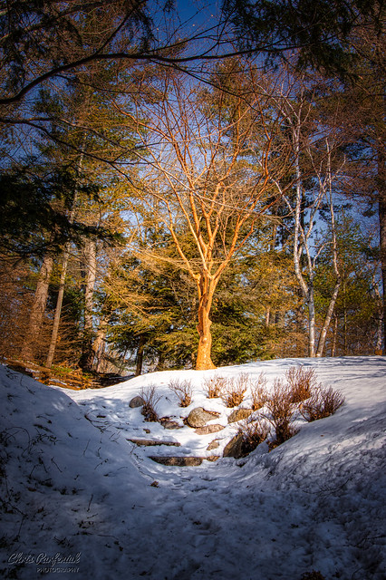 Light at the end of winter