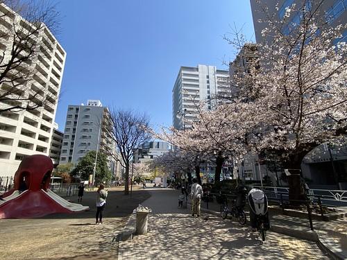 桜 恵比寿 2021/3/23