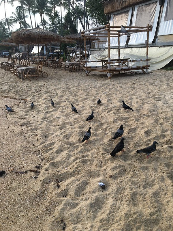 bophut morning walk koh samui ボプット朝散歩 サムイ島
