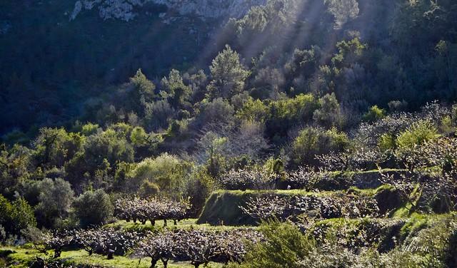 Primeros rayos de luz en el valle.