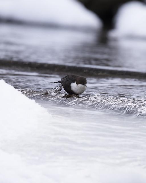 Dipper taking a bath