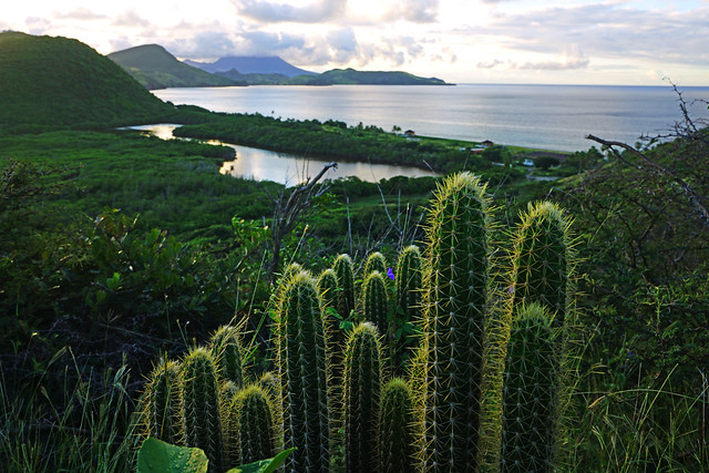 Wonderful scenery with a gorgeous cactus, St Kitts & Nevis