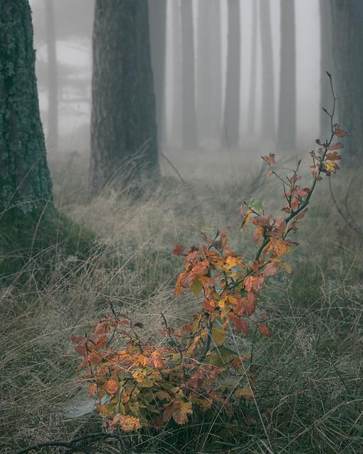fallen colour, forest floor   Auchterarder   Perthshire