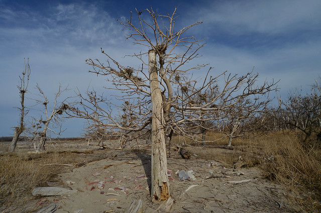 Leslie Spit, Bird Trees