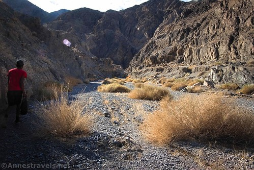 Walking up the wide section of Grotto Canyon, Death Valley National Park, California