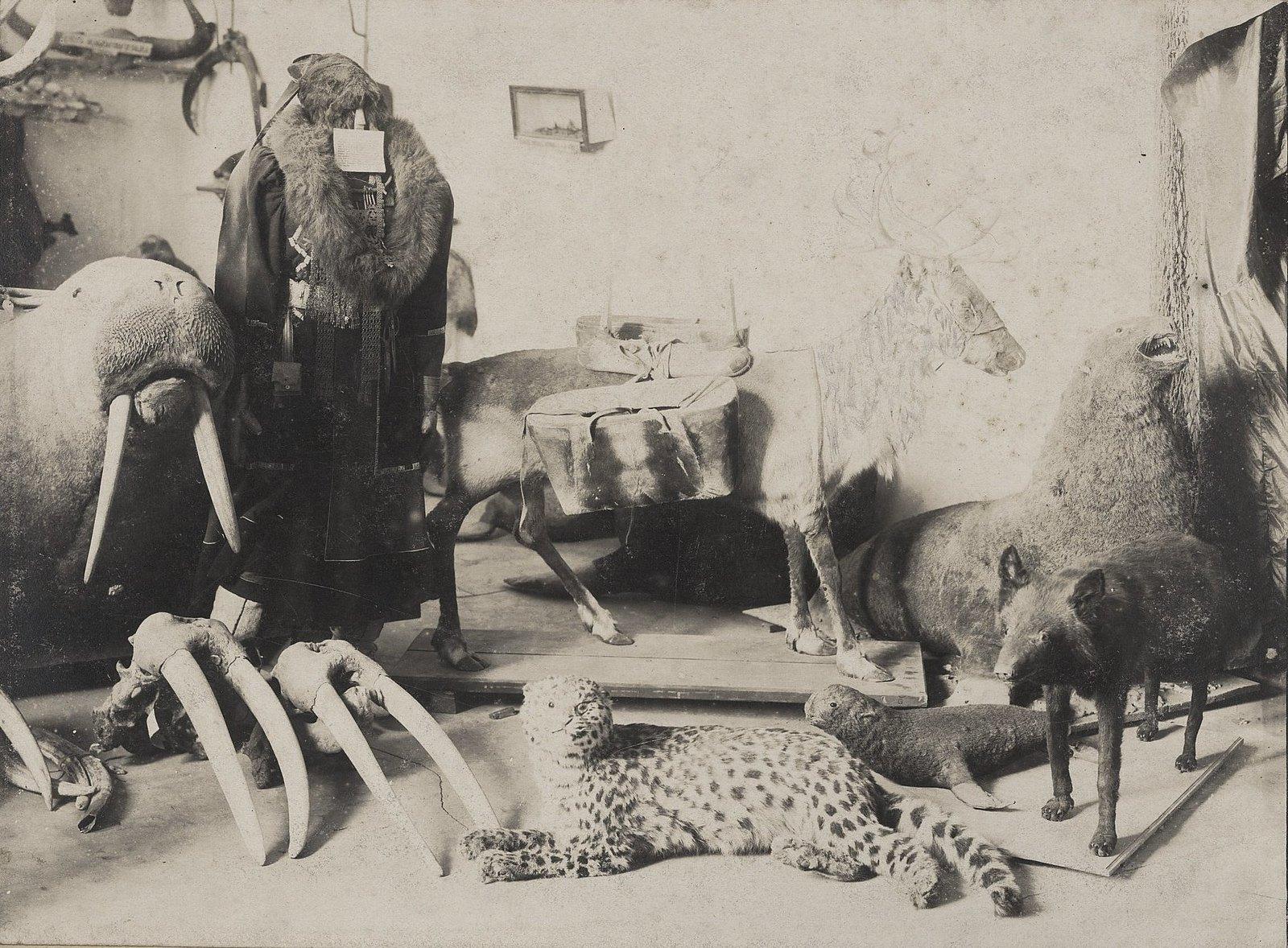 12. Чучела животных в экспозиции музея