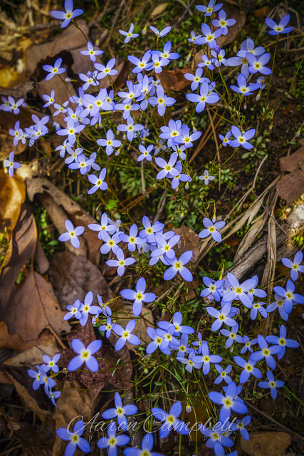 Wildflowers, 2021.03.24