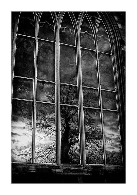 the churchyard oak tree