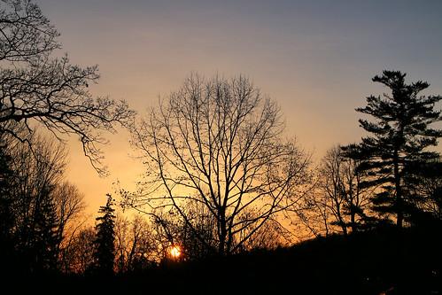 march trees londonontario darrellcolby