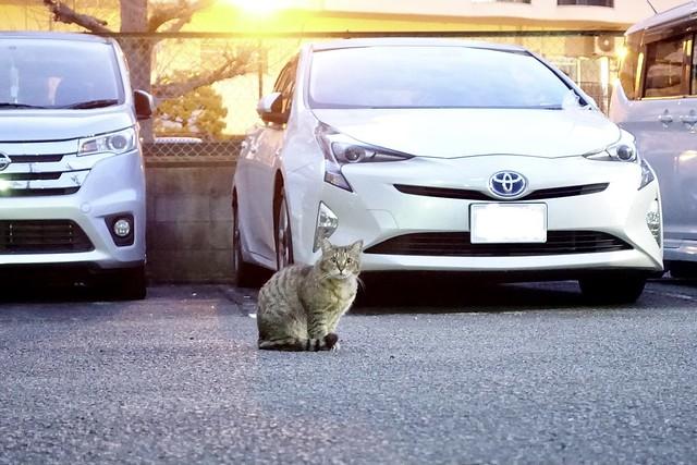 Today's Cat@2021−03−25