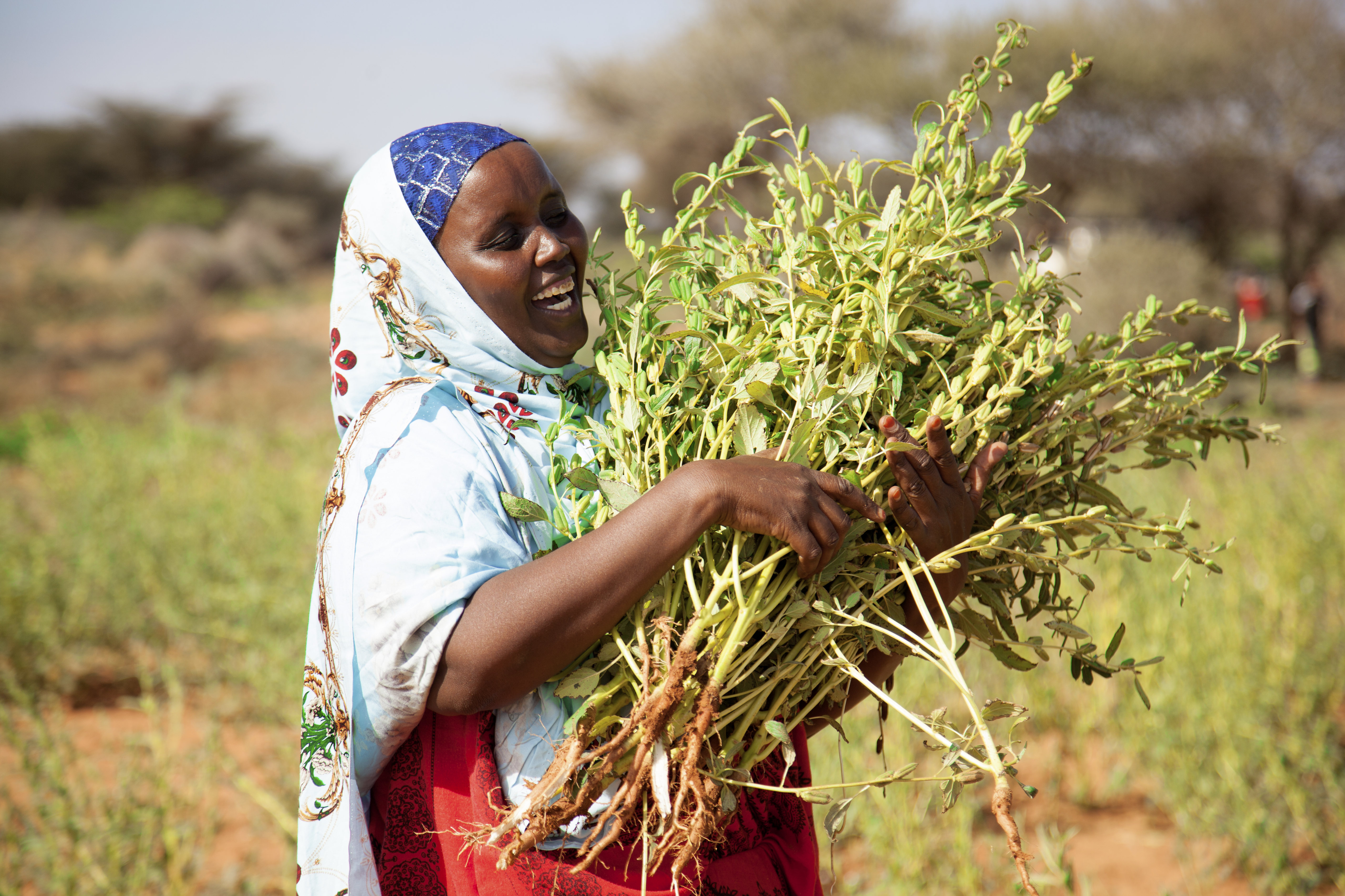 Strengthening the resilience of livelihoods in Somaliland