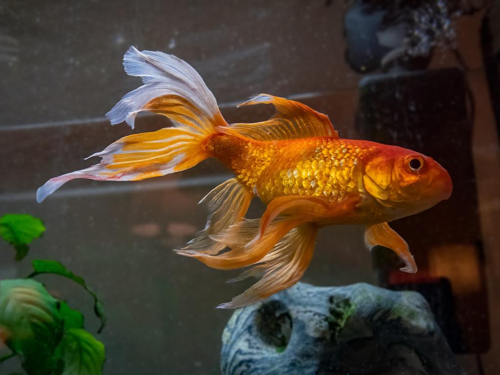 Le poisson rouge de mon neveu, le retour... 51071208661_b971ea1bbd_b
