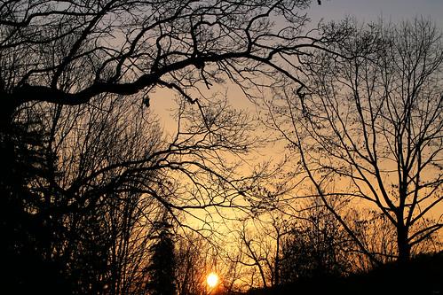 trees leaves sunrise morning silhouette londonontario darrellcolby