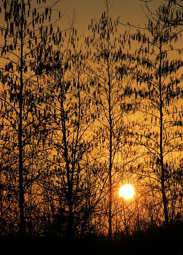 sun sunrise morning goodmorning londonontario darrellcolby