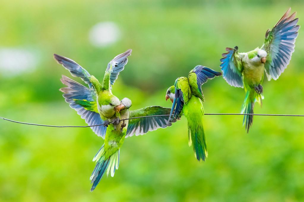 quarrelsome birds