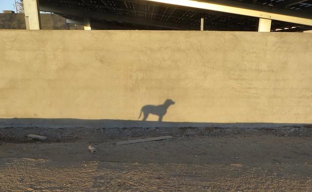 shadow puppy