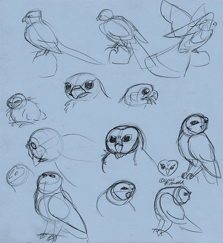 3.6.21 - Kestrel and Barn Owl