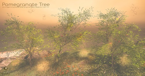 The Little Branch - PomeGranate Tree - UBER