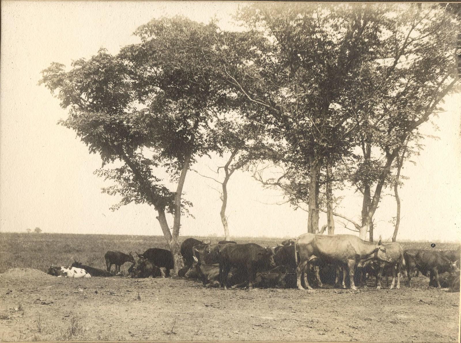 Деревья амурского бархата в низовьях реки Зеи