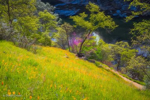 springlandscape california spring californiapoppy landscape sierranevadafoothills lightroom6 yubariver topazstudio yubariversouthfork pleasantvalleyroad canon5dmarkiii canonef24105mmf4lisusm