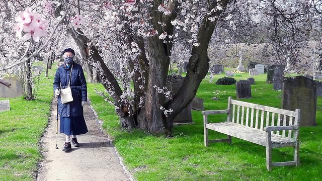 A Spring walk in the Churchyard.... .