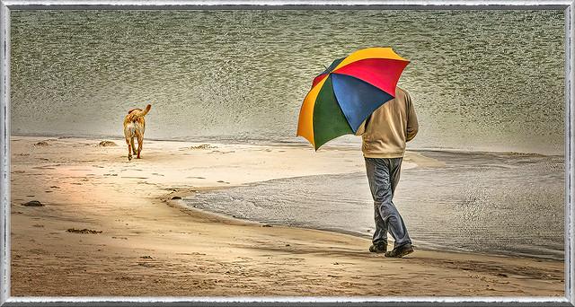 Dog walks man!