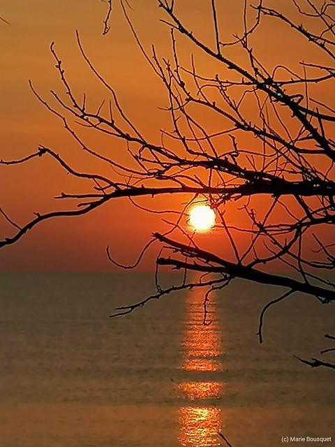 Soleil levant pris dans les branches