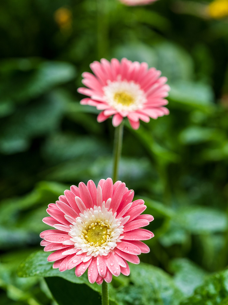Flowers make this world beautiful... ♥️♥️